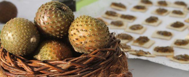 Webinar INIA | Copao fruto endémico de la región de Coquimbo