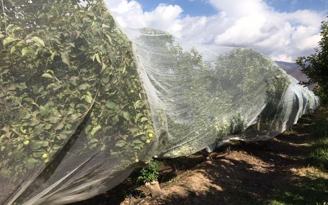 Webinar Protección de frutales   Malla Drapenet. ZIMEX