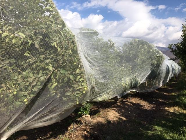 Webinar Protección de frutales | Malla Drapenet. ZIMEX
