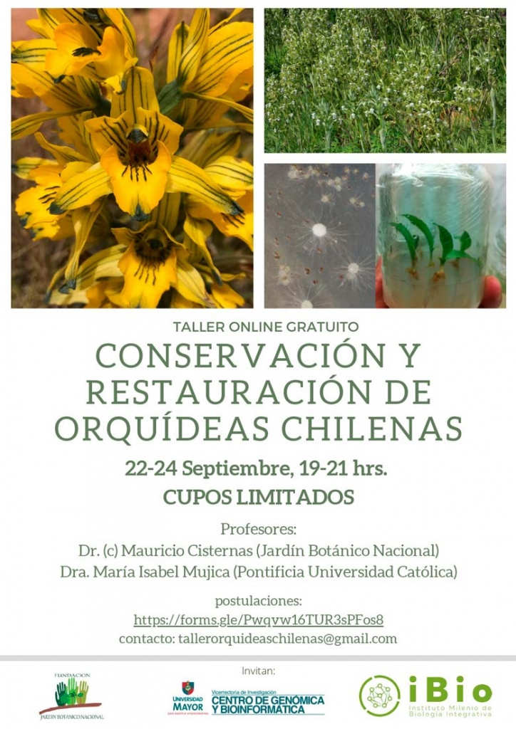 Taller online | Conservación y restauración de orquídeas chilenas