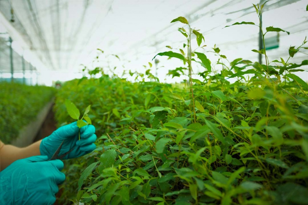 Sobre Biofertilizantes formulados en base a nanotecnología natural será la próxima charla de Agronomía UdeC