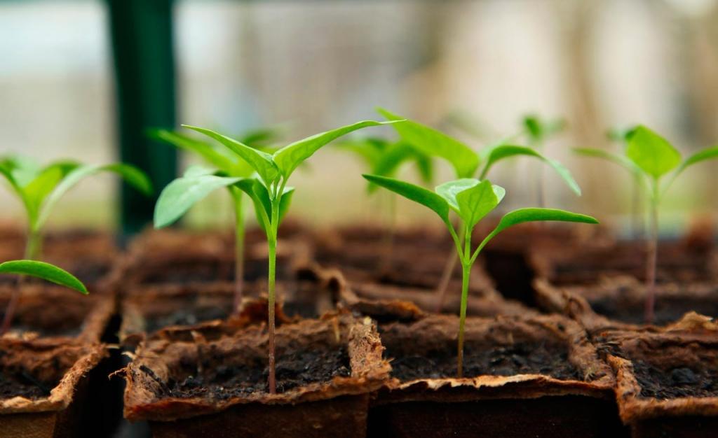 Académica de Agronomía UdeC realizará charla sobre las rizobacterias promotoras de la tolerancia a estrés en las plantas