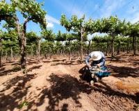 Experto de Agronomía UdeC ahondará en las herramientas eco-fisiológias para evitar el estrés hídrico en frutales