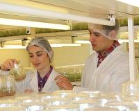 Experto de Agronomía UdeC realizará charla sobre la inducción de resistencia para el control de enfermedades en las plantas