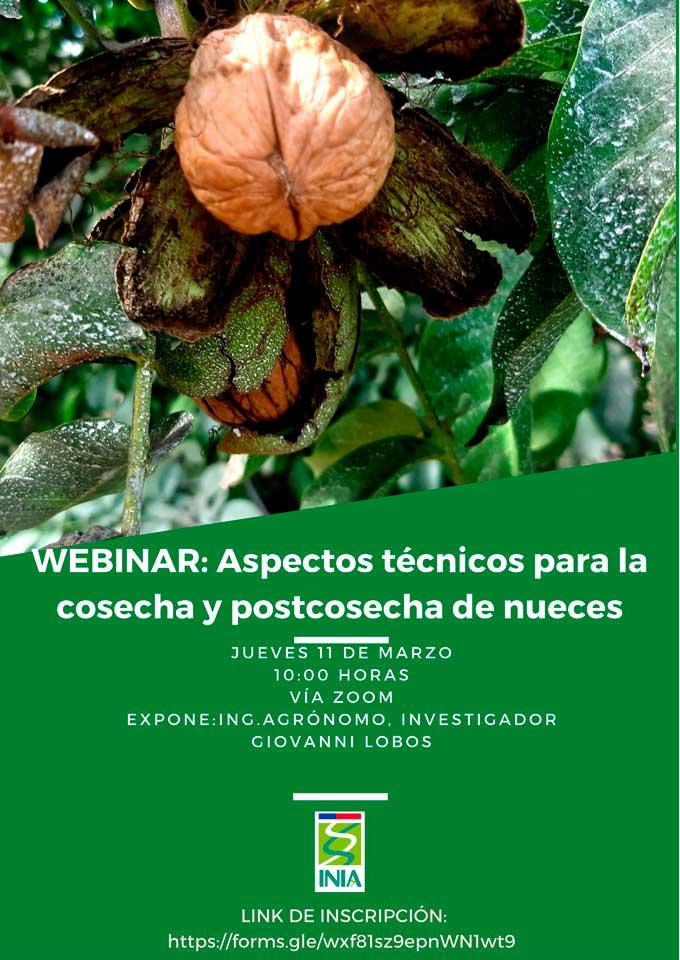 webinar: Aspectos técnicos para la cosecha y postcosecha de nueces
