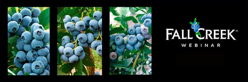 21 de abril: Webinar Cosecha y postcosecha - Importancia del momento de cosecha y la logística en definir la calidad y condición en arándano